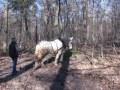 NaturWissenSchaffen: Waldarbeit und Pferdeschweiß