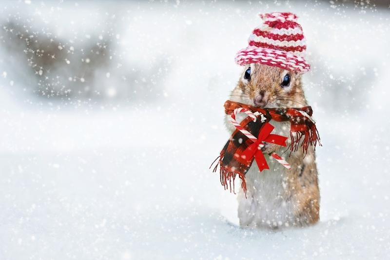 Fest(lich)es Netz: Spitzenwerte im Mobilfunk zu Weihnachten | Deine ...